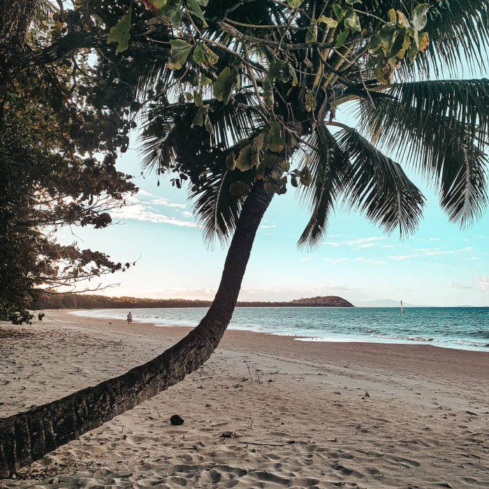 four mile beach palm tree